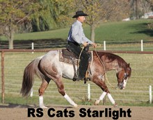 RS CATS STARLIGHT