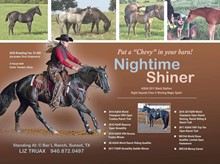 NIGHTIME SHINER